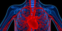 heart-lung-research-area
