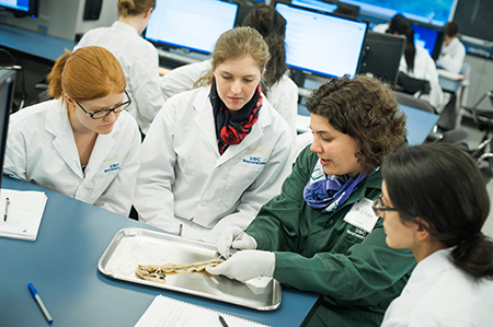 Claudia Krebs (in green lab coat) discusses the finer points of the spinal cord with studnets in a neuroanatomy lab. Photo by Martin Dee