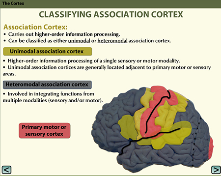 A slide from one of the neuroanatomy learning modules.
