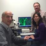 Research team: Christian Naus, Wun Chey Sin and John Bechberger