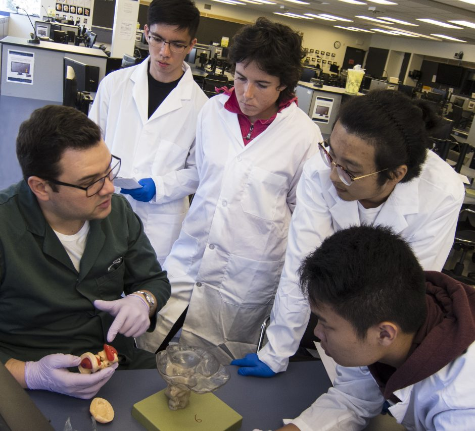 Instructor Parker Holman helps students in the Vancouver Summer Program in Medicine understand the brain's various parts.